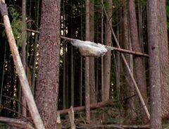 Wood mite cocoon