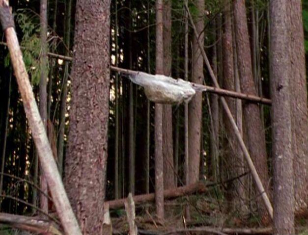 File:Wood mite cocoon.jpg