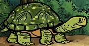 TurtleSHE