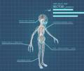 XComEU Sectoid anatomy.png
