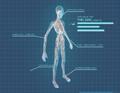 XComEU Thin Man anatomy.png