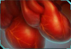 Secondary Heart