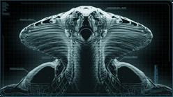Viper Autopsy