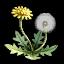 Doga Dandelion icon.png