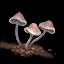 Caseras Mushroom icon.png