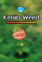 KeninWeed