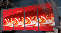 WhyFish