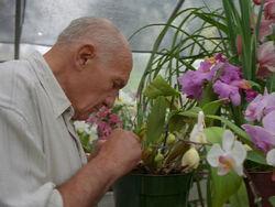 Victor Klemper Orchidées Opération presse-papiers