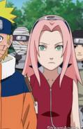 Sakura23 (19)