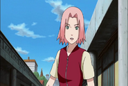 Sakura29929 (2)