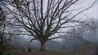 4x21 Tree