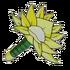 Lotus Twister