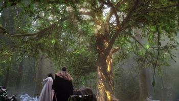 Drzewo Mądrości