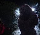 Niedźwiedź i łuk