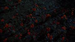 5x18 Poppy Field