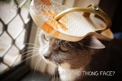 Thong-cat