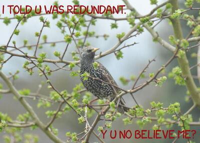 Redundant-20150411