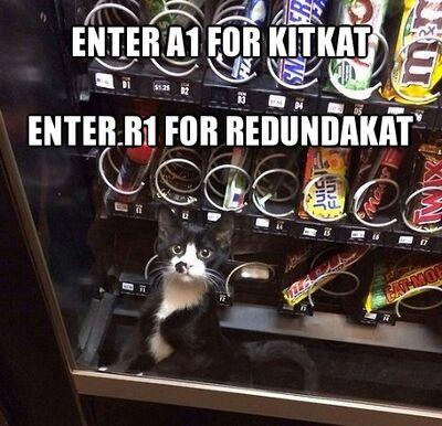 Redundakitty47