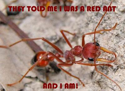 RED-und-ANT