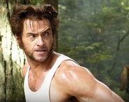 Wolverine forest