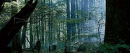 Forest-6727