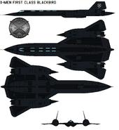 Blackbird 01