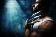 New Wolverine Image