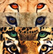 Linx-kittyeyes