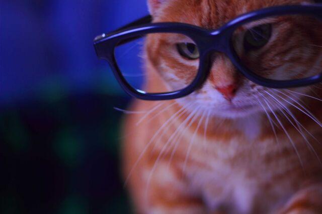 File:Linx-kitten.jpg