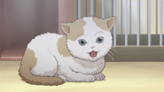 OVA2 Cat