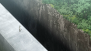 Norman discovers cliff