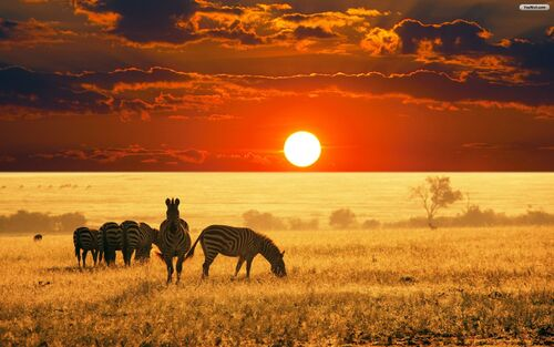 Africa-sunset-wallpaper-1920x1200-379-kb