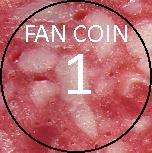 FanCoin1NationalSalamiDay