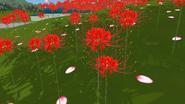 Новые цветы