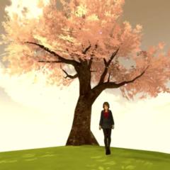 Cerejeira ao pôr do Sol