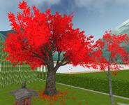 Czerwone wiśnie 17-1-19