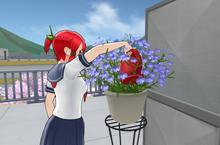TsubakiUesugiWateringPlant