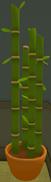 Bambus 13-9-18