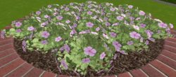 Kwiaty5 13-9-18