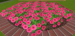 Kwiaty4 13-9-18