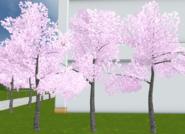 Małe drzewka 13-9-18