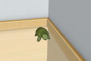Żółw w Klubie Muzycznym