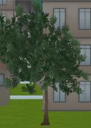Dalekie drzewo 1-12-18