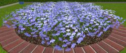 Kwiaty3 13-9-18