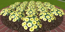 Kwiaty2 13-9-18