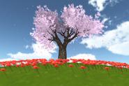 Cherry march15