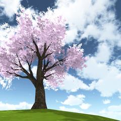 另一面的櫻花樹 [15/11/2015]