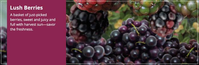 20150827 Lush Berries Banner yankeecandle com