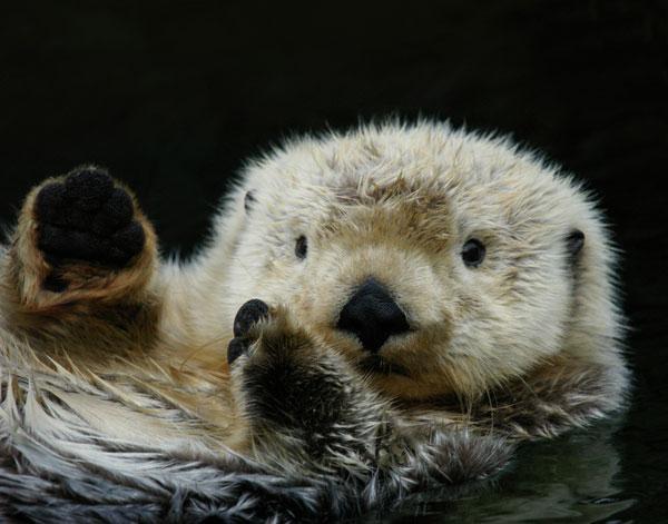 File:Marvin the otter.jpg