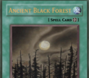 Ancient Black Forest